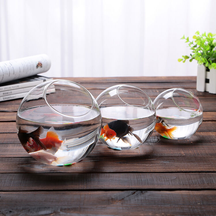 Round glass ball bowl vase terrarium succulents planter for How to make a fish bowl