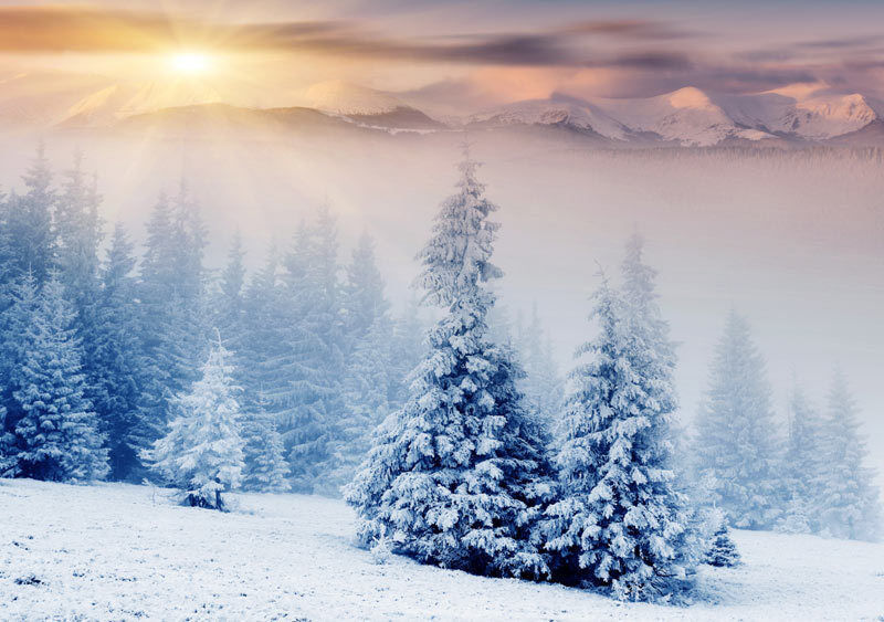 Snow Trees Winter Mountains 3D Full Wall Mural Photo