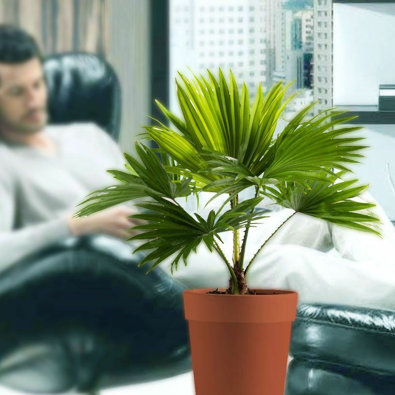 Palm Plants For Indoors: 1 Palm Tree In Pot Indoor Tropical Garden Plant Footstool