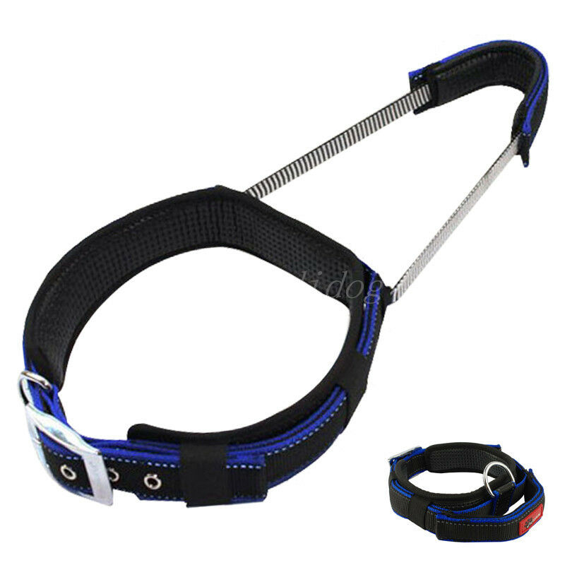 Best Dog Training Collar To Buy