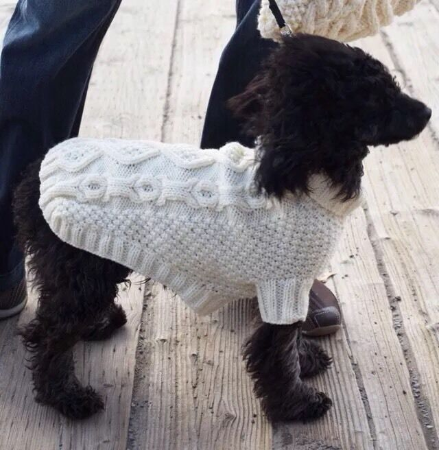 Dog Coat Knitting Pattern Uk : Dog coat jumper patons knitting pattern biscuits and bone