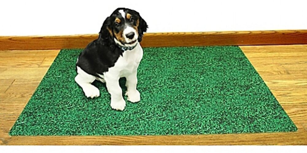 how to make your dog pee on a pad
