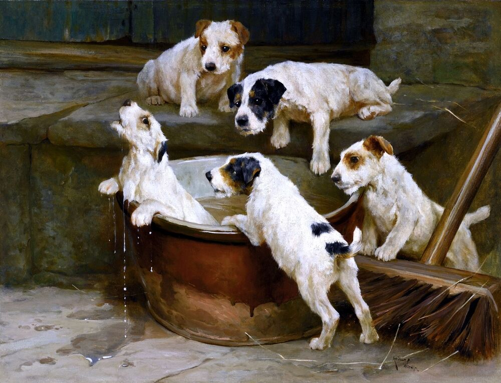 First Bath Wire Fox Terrier Puppies Painting By Arthur Wardle Art