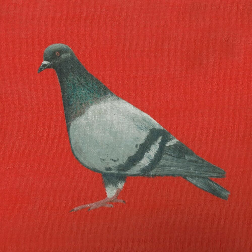 Blank Greeting Card Pigeon Ebay