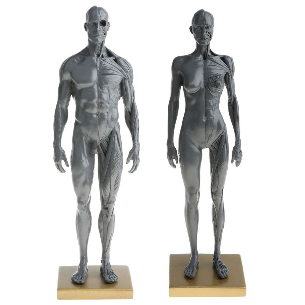 11 Male Female Anatomy Figure Collection Artist Anatomical