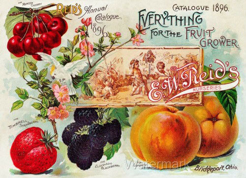 1896 Fruit Seed Catalogue Refrigerator Fridge Gift Magnet Free Ship