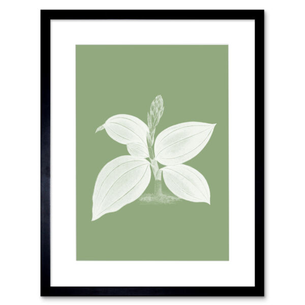 Royaume-UniWhite and Green Exotic Flora Art Print Framed Poster Wall Decor