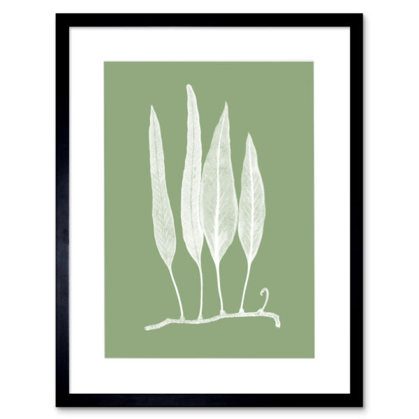 Royaume-UniWhite and Green Exotic Plant Art Print Framed Poster Wall Decor