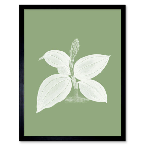 Royaume-UniWhite and Green Exotic Flora Wall Art Print Framed 12x16