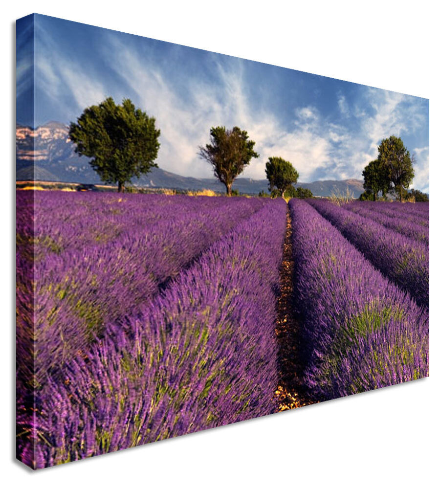 Lavender Field Floral Flower Canvas Wall Art Perfect