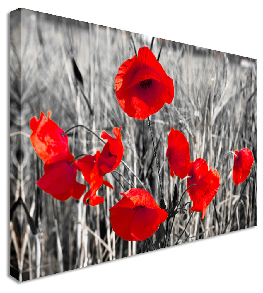 Poppy red black white flower canvas wall art pictures for Red wall art