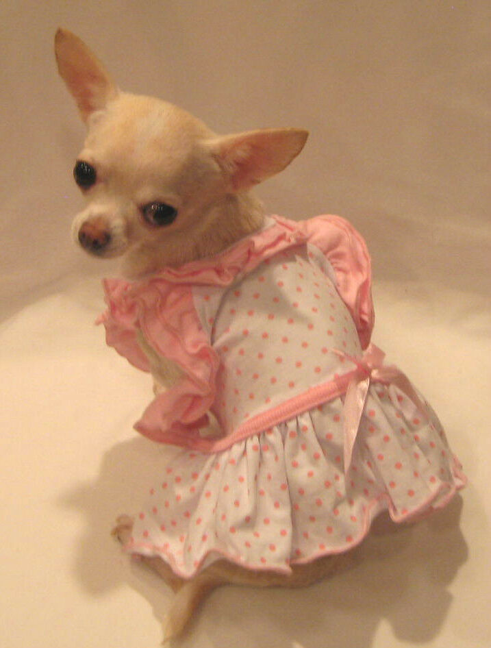 Bitty baby ruffle dog dress pet dress dog clothes yorkie - Dog clothes for chihuahuas ...