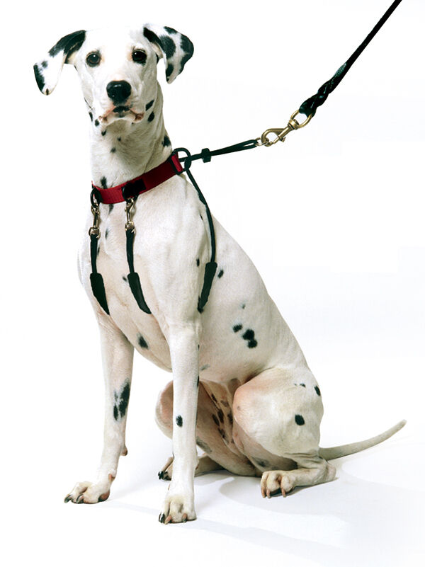 Pet One Dog Harness