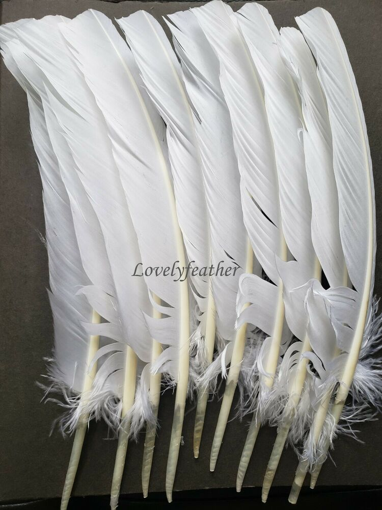 1000 pieces white colour 25 to 30cm turkey quill feathers for Where to buy craft feathers