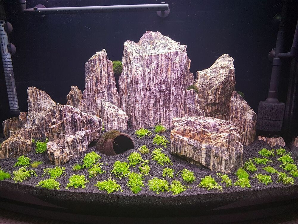 15 kg NATURAL WOOD STONE FOR AN AQUARIUM AQUASCAPING ...