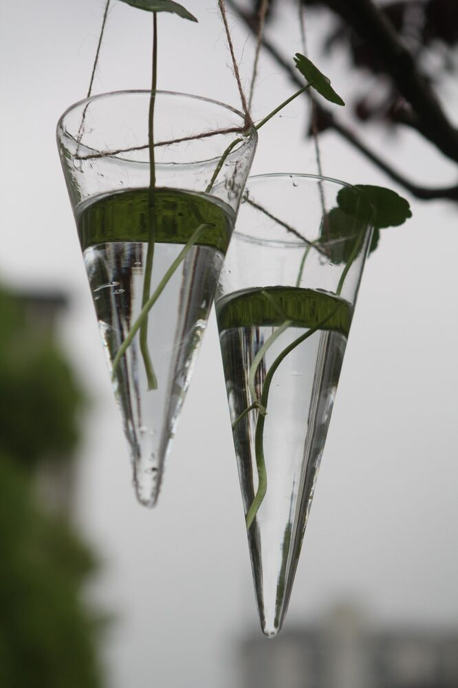 Clear Glass Wall Decor : Cone glass vase terrarium hanging wall mounted flower