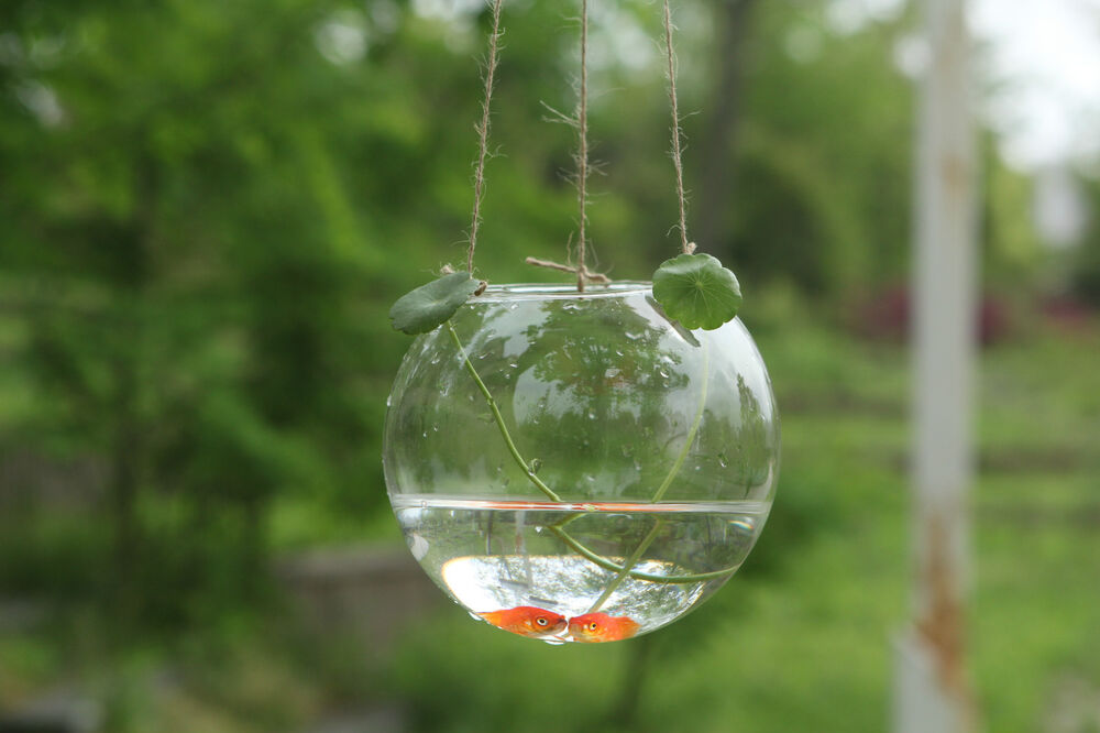 Glass Hanging Ball Vase Fish Aquarium Tealight Candle