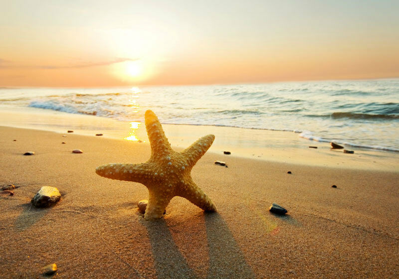 Sand beach sunset starfish 3d full wall mural photo for Beach sunset mural