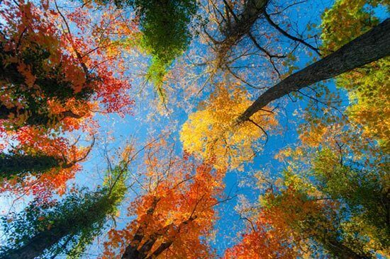 Overturned head autumn trees 3d full wall mural photo for Autumn tree mural