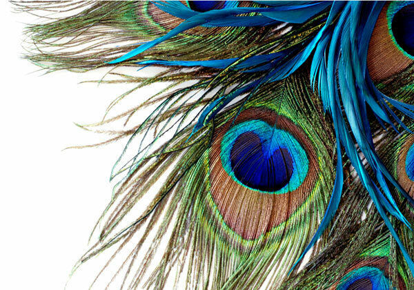 Peacock Art Photography Wallpaper Hq Backgrounds: Peacock Feather Clipart Art 3D Full Wall Mural Photo