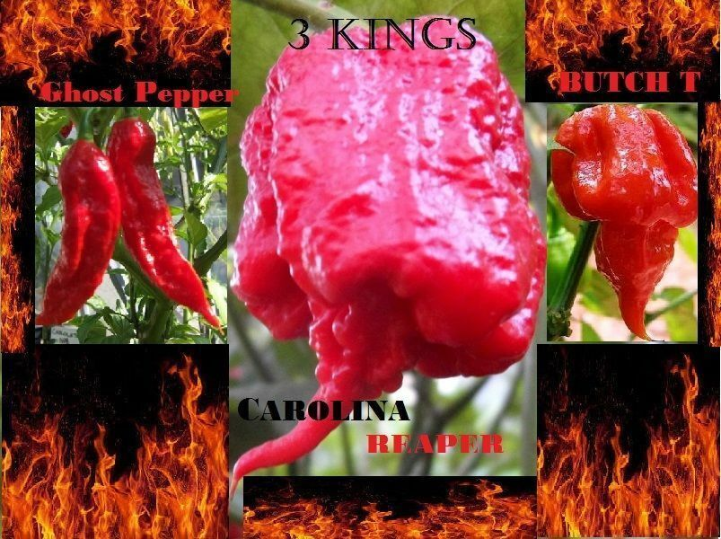COMBO PACK Ghost pepper Carolina Reaper Trinidad Scorpion Butch T chili seeds | eBay