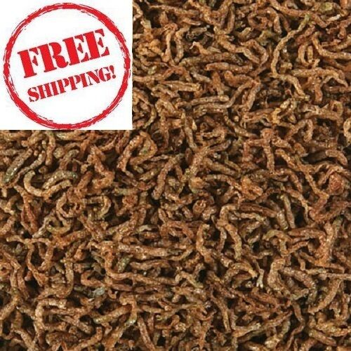 how to raise bloodworms for fish food