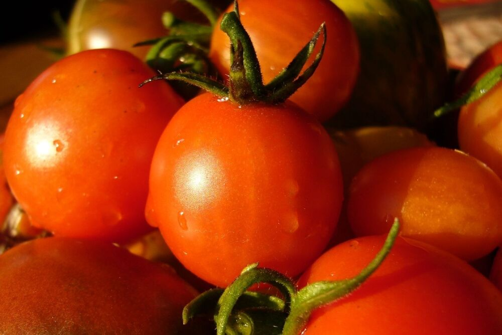 $1.69 Max Shipping//order Heirloom 2019 Seeds Beefsteak Tomato Seeds 75