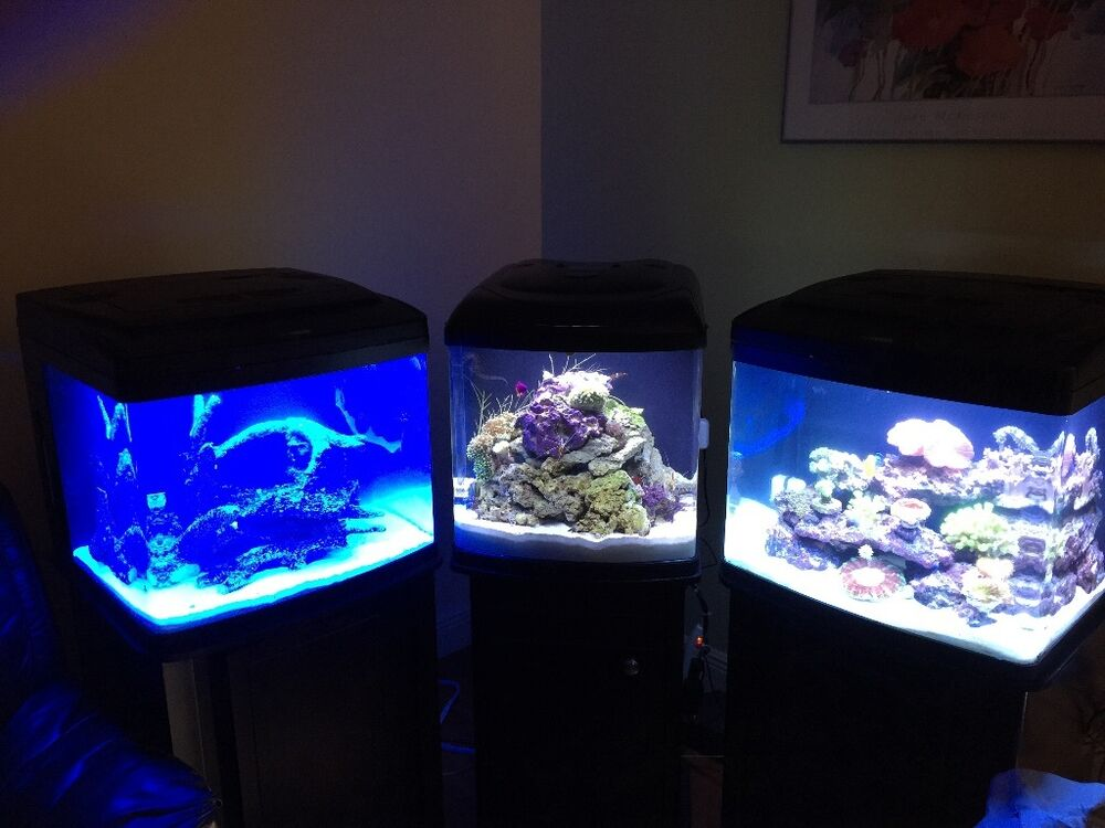 3 complete 30gal bio cube aquariums 2 without chiller ebay for Bio cube fish tank