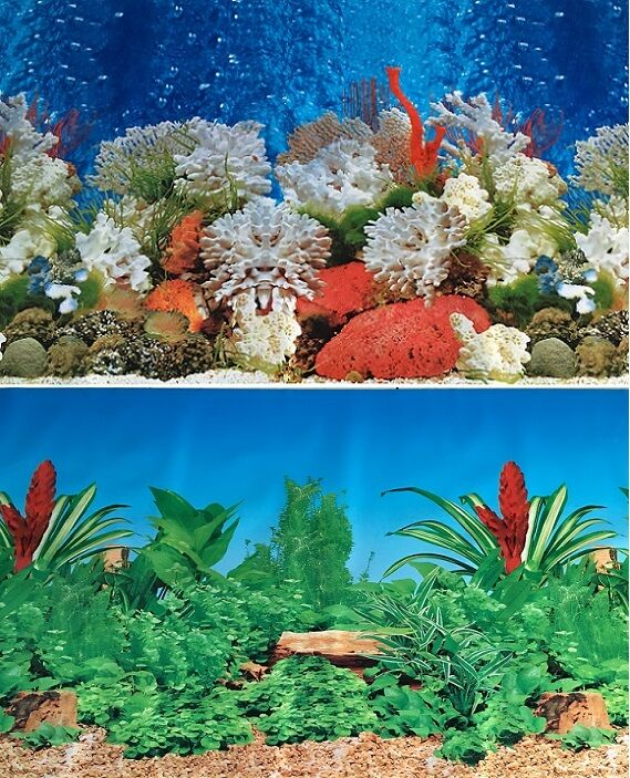 Aquarium background decoration coral reef 2 sided picture for Aquarium coral decoration
