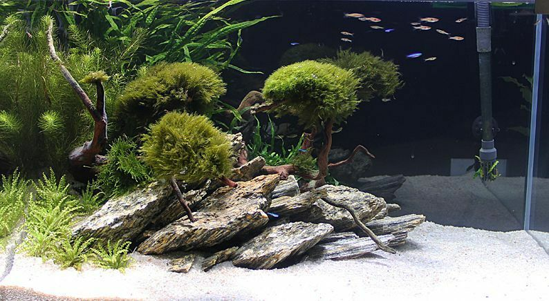 Wood Stone Aquascape