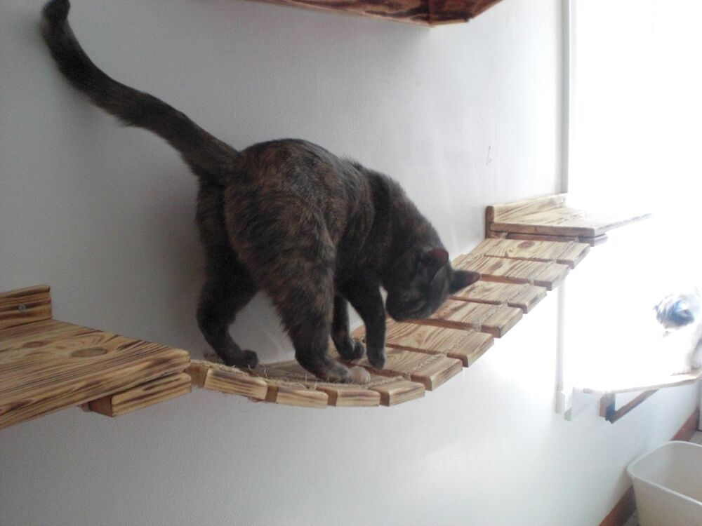 Cat On A Rope Free