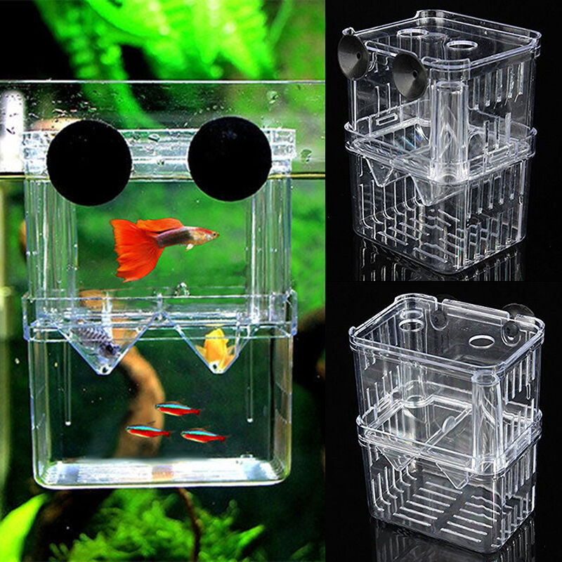 Floating aquarium fish breeding tank breeder box fry trap for Fish breeding tank