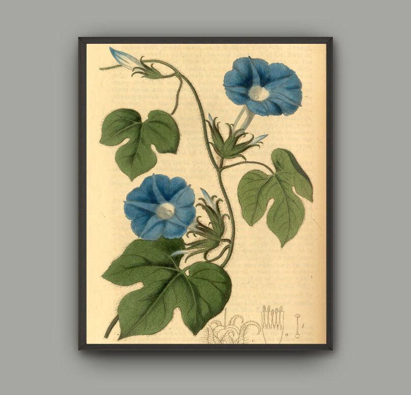 Framed Canvas Print Vintage Poster Flowers Blue Floral