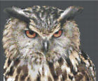 """Counted Cross Stitch Kit """"Owl"""" by Andrea's Designs"""
