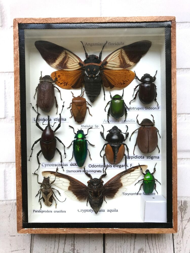 The New Beetle Case Study