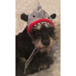 Shark Novelty Dog Knit Hat with Faux Shark Fin by Worthy Dog NEW FAST SHIPPING!