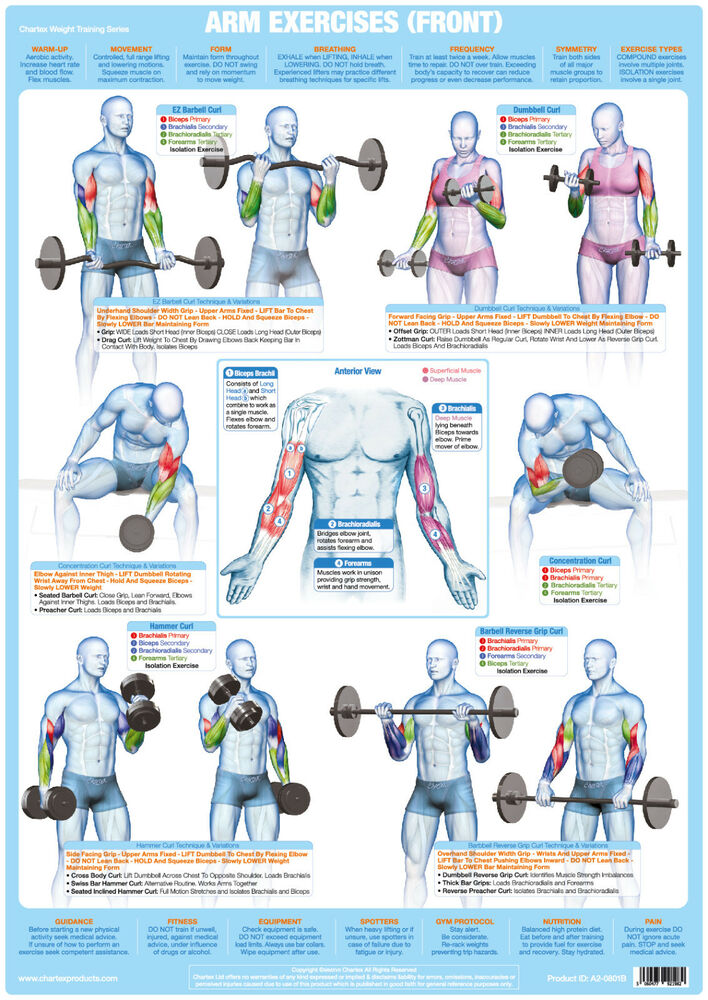 Arm Muscles (Front) Weight Lifting Poster Bodybuilding ... | 708 x 1000 jpeg 180kB