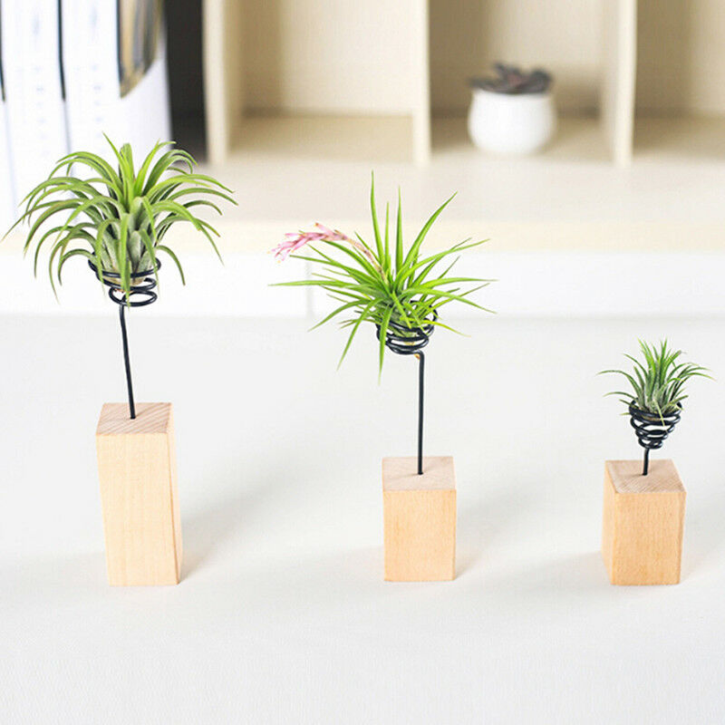 Nordic Wooden Air Plant Stand Holder Tabletop Tillandsia Planter