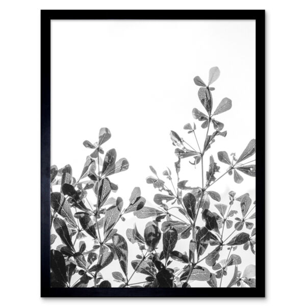 Royaume-UniBlack White Photography Plant Wall Art Print Framed 12x16