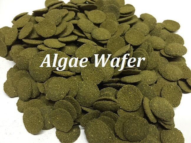 Best quality value 6 spirulina algae wafer food for for Bottom feeder fish list