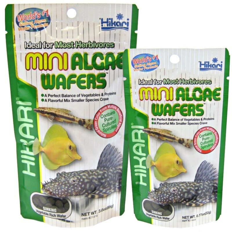 Hikari mini algae wafer wafers 85g plec tropical marine for Hikari fish food