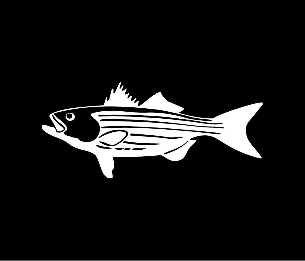 Striped bass vinyl decal car window bumper sticker striper for Free fishing stickers