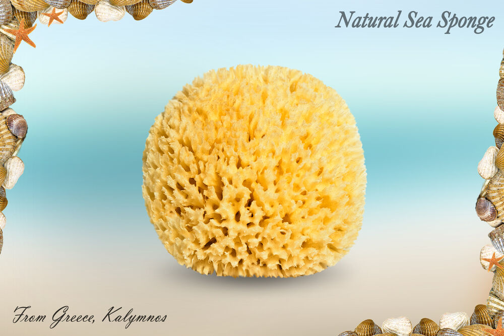 Natural Sea Sponge Large Sizes 6 7 8 Best Quality From