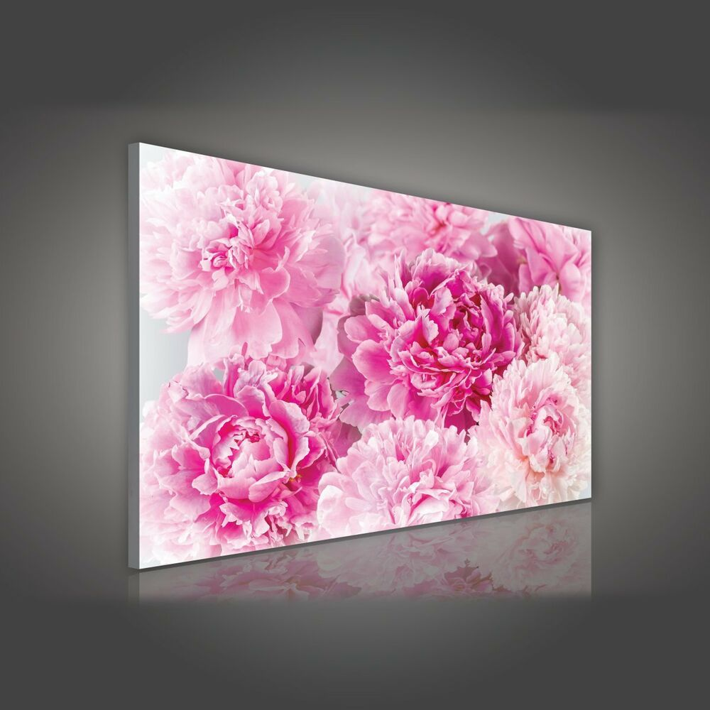 leinwandbild bild wandbild wandbilder blumen rosa pfingstrosen blume 622 o1 ebay. Black Bedroom Furniture Sets. Home Design Ideas