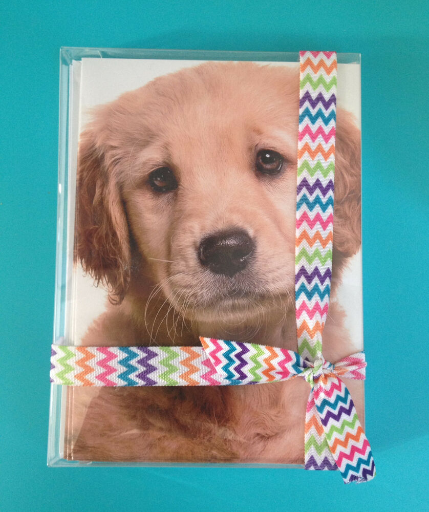 golden retriever greeting cards 10 pack dog pet all occasion blank message puppy ebay. Black Bedroom Furniture Sets. Home Design Ideas