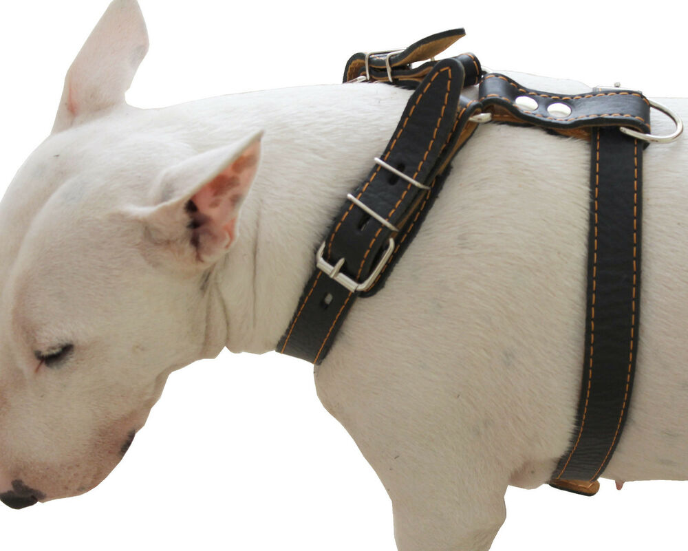 Genuine Leather Dog Harness 25 Quot 30 Quot Chest For Medium And