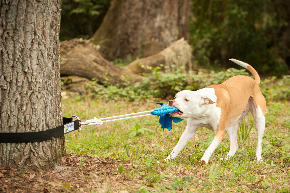 Super Strong Dog Toys