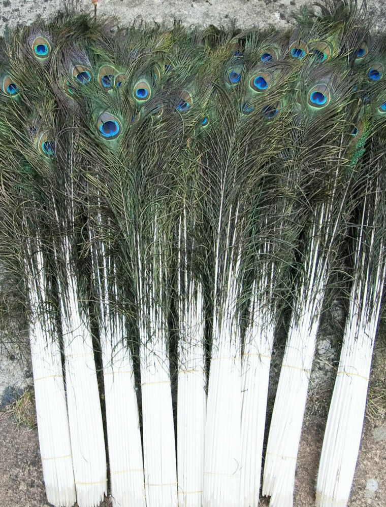 Long peacock tail feathers natural 70 80cms long for for Natural feathers for crafts