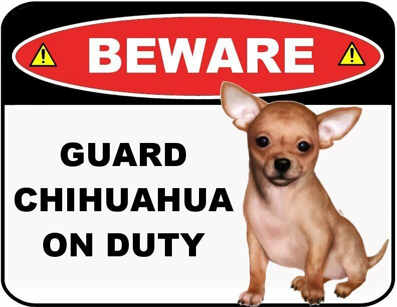 Funny Sign Quot Beware Guard Chihuahua On Duty Quot Laminated