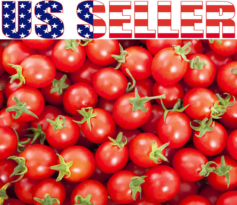 30+ ORGANICALLY GROWN Sweetie Cherry Tomato Seeds Heirloom